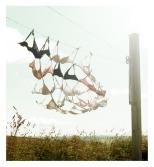 Corde expérimentale en amont du soutien-côte, par Marianne Papillon 2012